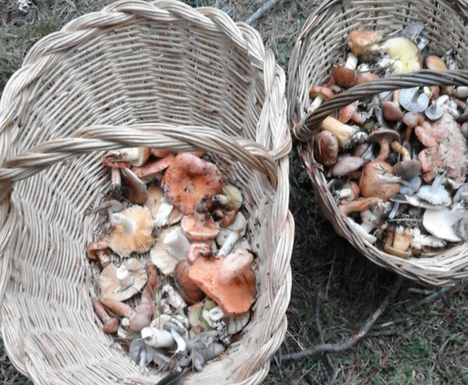 The secret of menorca s wild mushrooms - Bonin sanso ...