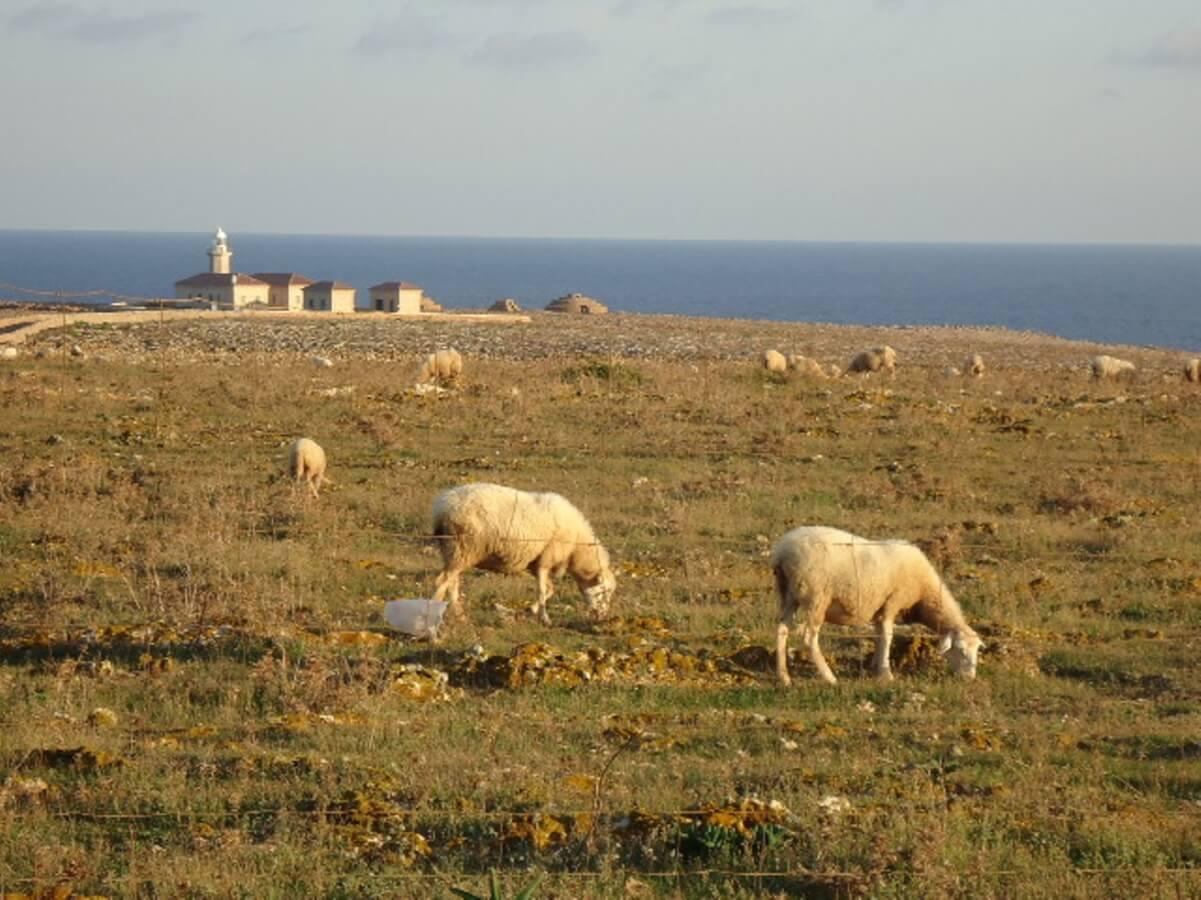 10 octubre - 150 miradas de Menorca